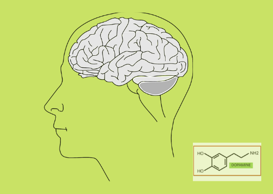 Dopamine and Parkinson's Disease – What's the Link?