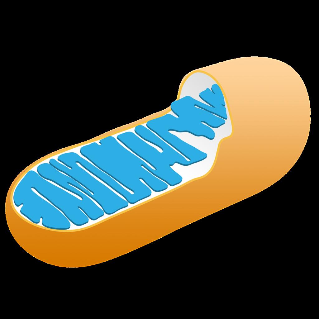 mitochondria and Parkinson's